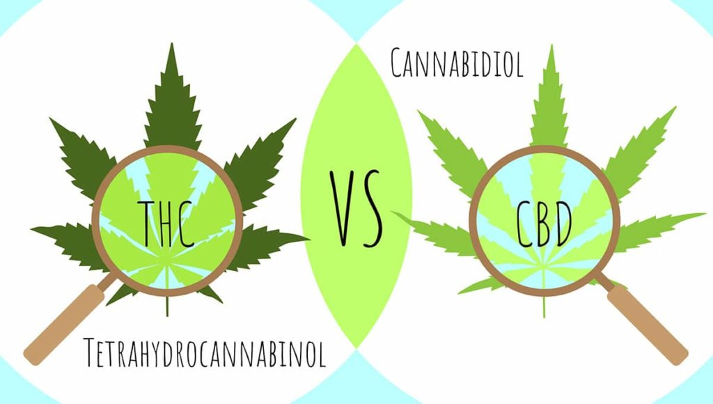 Difference between CBD and THC animation